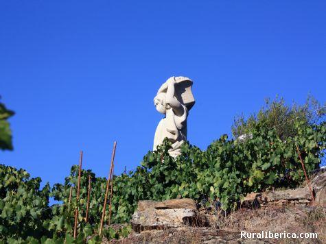 Vi�edos. Monforte de Lemos, Lugo - Monforte de Lemos, Lugo, Galicia