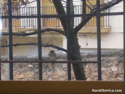 Gorrrión amigo. Bijuesca, Zaragoza - Bijuesca, Zaragoza, Aragón