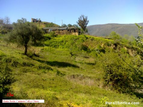 El verde de Santa María de Mones. Orense - Santa María, Orense, Galicia