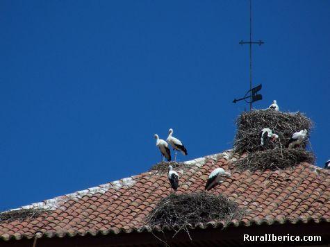 Cigüeñas. Piedrahíta, Ávila - Piedrahíta, Ávila, Castilla y León