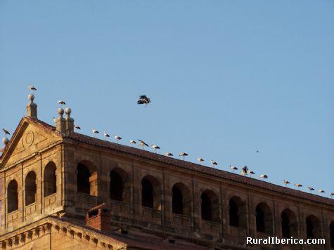 Cigüeñas sobre los tejados de Salamanca - Salamanca, Salamanca, Castilla y León