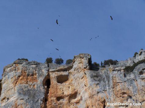 sobrevolando el Cañón del río Lobos - soria, Soria, Castilla y León