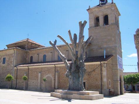 Olmo centenario - Boñar, León, Castilla y León
