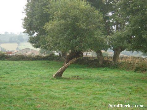 Exemplo da resistencia da natureza - Larouco, Orense, Galicia