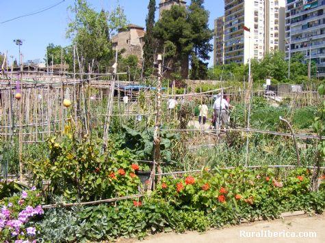 Huertos urbanos para jubilados, Parque de San Marti, Barcelona - Barcelona, Barcelona, Cataluña