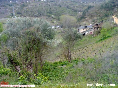 Airaseber-Santa María de Mones-Petín - Petín, Orense, Galicia