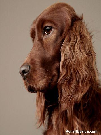Isto e un luxo de can - Vigo, Pontevedra, Galicia