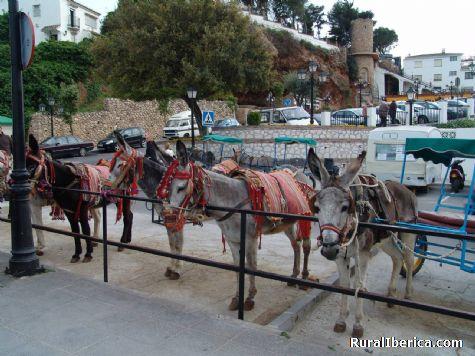 Burros-Taxis - Mijas, Málaga, Andalucía