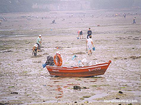 Marisqueo en Combarro - Combarro, Pontevedra, Galicia