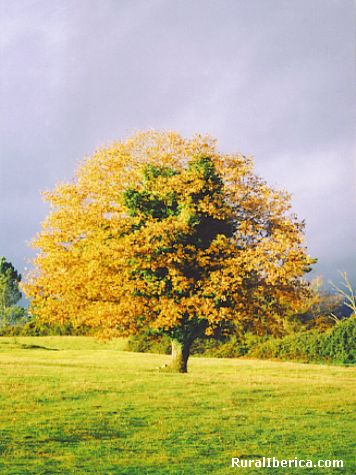 Outono - Lalin, Pontevedra, Galicia