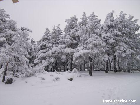 La naturaleza en Santa Inés. Soria - Soria, Soria, Castilla y León