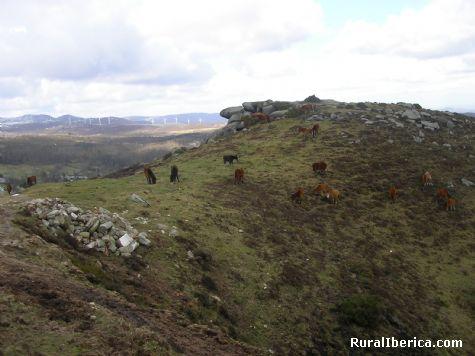 Caballos del Cadramon. Valle del Oro, Lugo - Valle del Oro, Lugo, Galicia