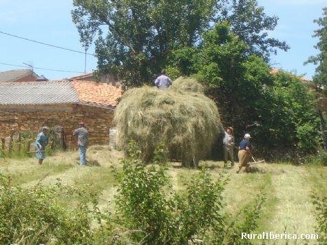 Recogiendo la hierba. Alsite, Zamora - Alsite, Zamora, Castilla y Le�n