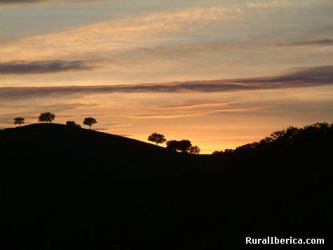 Y en Monfrag�e, buitre negro - Salto del Gitano, C�ceres, Extremadura
