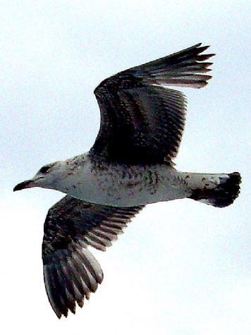 Cuando el ave vuela bajo.... - El grove, Pontevedra, Galicia
