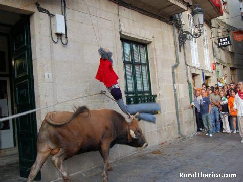 Festa do Boi. Allariz, Orense - Allariz, Orense, Galicia