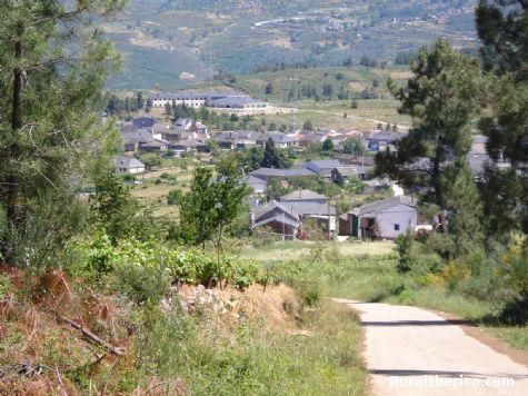 Larouco entre piñeiros - Larouco, Orense, Galicia