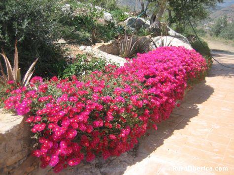 Rincón florido en casa de campo - Comares, Málaga, Andalucía