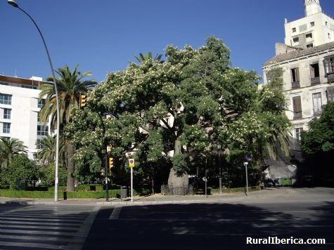 El Barrilito. Málaga, Andalucía - Málaga, Málaga, Andalucía