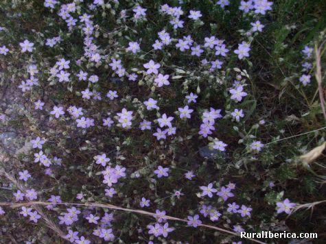 flores en el camino - Santa María-Petin, Orense, Galicia