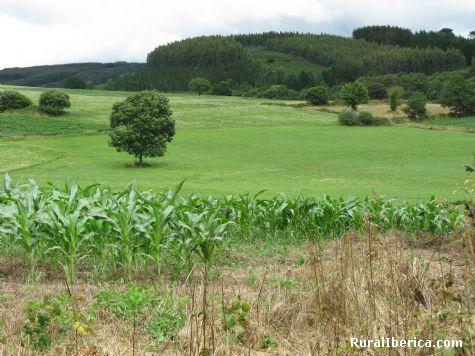 Paisaje - San Cosme, Lugo, Galicia