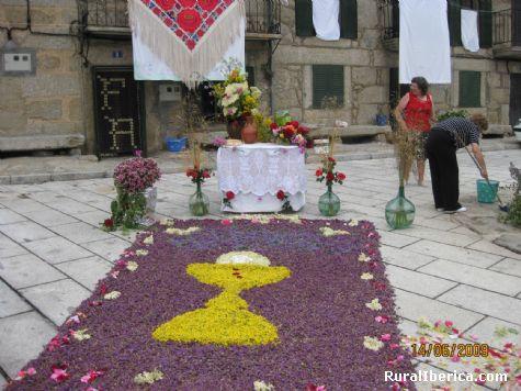 Alfombra de flores en la fiesta del Corpus Christi - Navacepedilla de Corneja, �vila, Castilla y Le�n
