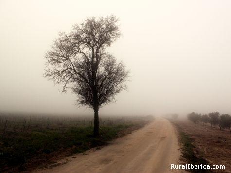 La Niebla. Herencia, Ciudad Real - Herencia, Ciudad Real, Castilla la Mancha