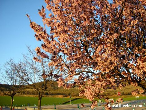 La primavera en la ribera del Jiloca - Burbáguena, Teruel, Aragón
