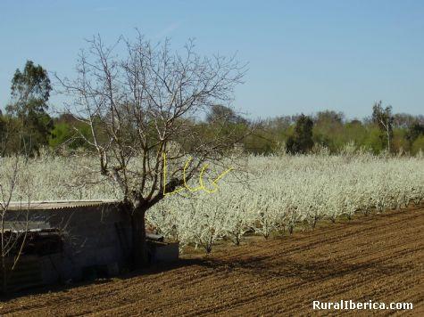 Paisajes cubiertos por flores. Valdelacalzada, Badajoz - Valdelacalzada, Badajoz, Extremadura