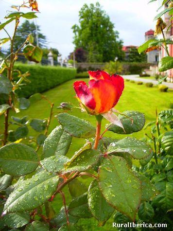 Rosa con lágrimas - Llanes, Asturias, Asturias
