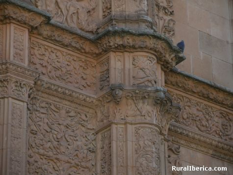 La rana (Fachada de la Universidad). Salamanca - Salamanca, Salamanca, Castilla y León