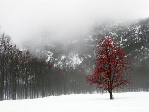 El color del invierno. Panticosa, Huesca - Panticosa, Huesca, Aragón