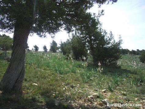 Gamones en primavera. Royuela, Teruel - Royuela, Teruel, Aragón