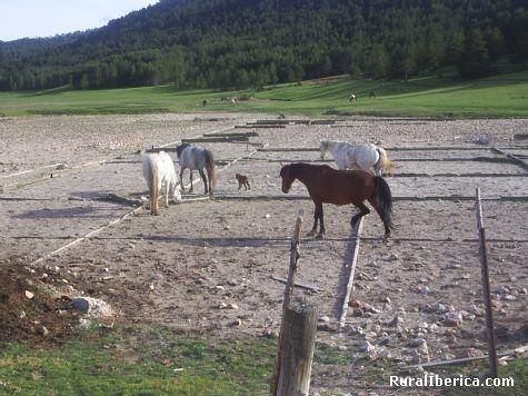 Caballos y sal. Sierra de Albarracin, Teruel - Sierra de Albarracin, Teruel, Aragón