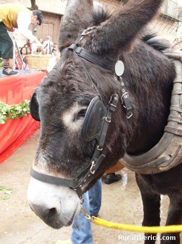 amigo burro - Rueda, Valladolid, Castilla y Le�n