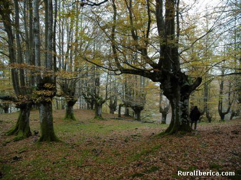 patxikoren etxea - Gorbea parque natural - Urigoiti Orozko Bizkaia, Vizcaya, Pa�s Vasco