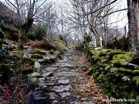 Camino enlosado - Edrada, Orense, Galicia