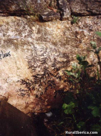 Puede ser un fosil vegetal. Petín, Orense - Petín, Orense, Galicia