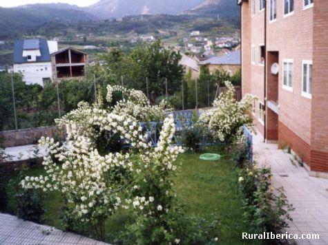 Jazmines en el jardín. Petín, Orense - Petín, Orense, Galicia
