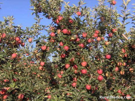 Frutos del campo. Castellnou de Seana, Lérida - Castellnou de Seana, Lérida, Cataluña