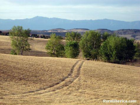 Campos de siembra - Alcaudete de la jara, Toledo, Castilla la Mancha